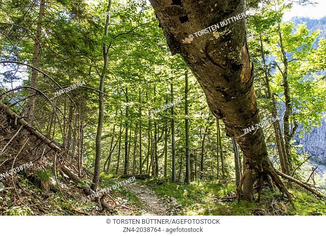 Hiking Trail in Eastern Limestone Alp Region. Kalkalpen National Park. Austria