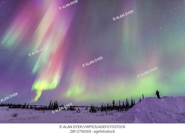 A lone observer gazes at an array of colourful curtains of aurora during an active display, March 6, 2016, with curtains in the evening twilight adding blue...