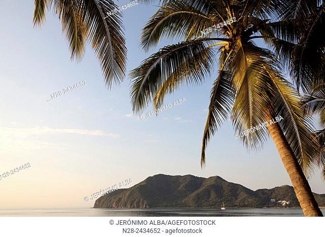 Coconut palm trees. Manzanillo beach. Pacific Ocean. Colima. Mexico