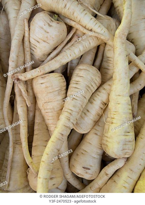 White carrots lack any pigmentation hence the presence of the white colour, they tend to have a smoother flavour than orange carrots
