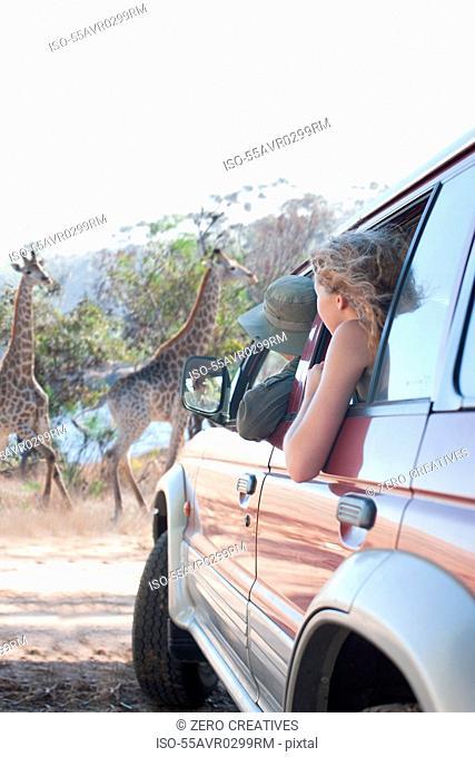 Women looking at giraffes from vehicle, Stellenbosch, South Africa