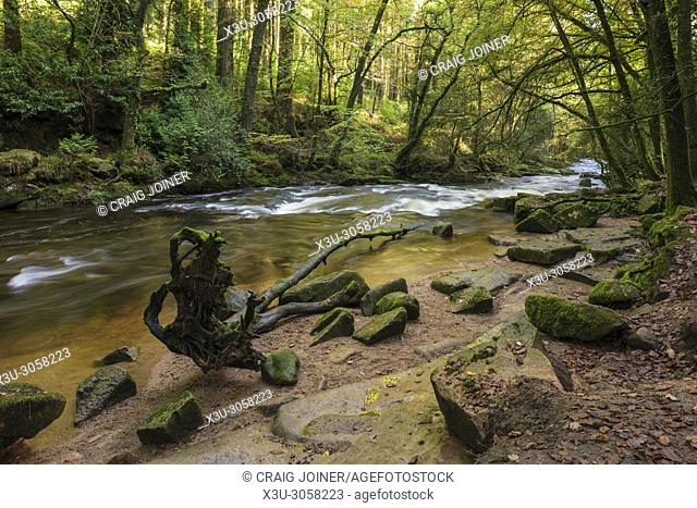 The River Erme flowing though autumn woodland on the edge of the Dartmoor National Park at Ivybridge, Devon, England