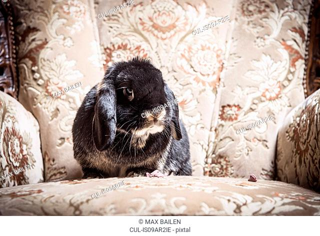 Portrait of rabbit sitting on chair