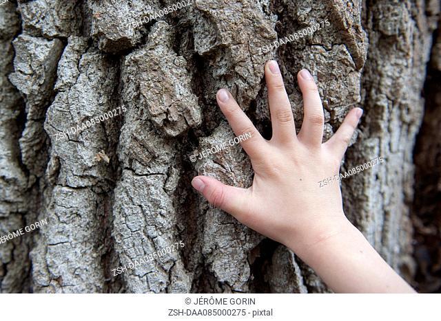 Child's hand touching tree bark