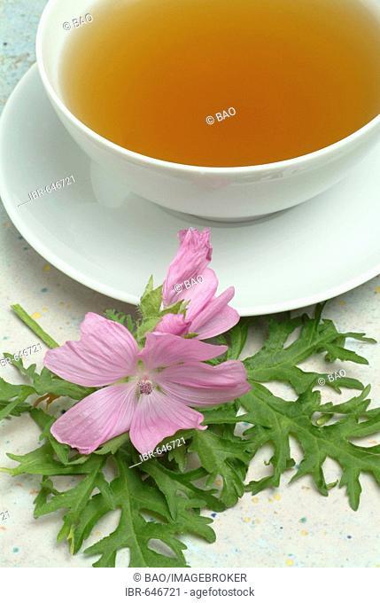 Musk-Mallow (Malva moschata), herbal tea