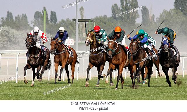 Horse racing, in Budapest, Hungary