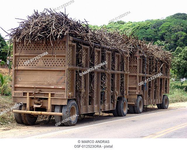 sugar canes cut sliced in a truck