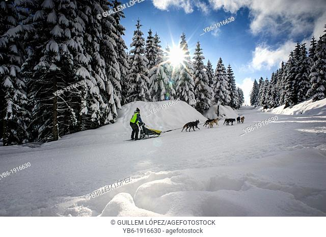 The 2013 Border Rush Sled dog competition takes part in the stunning scenery of the Izery mountains, Poland