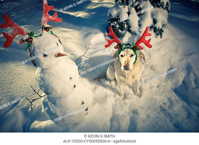Dog wearing reindeer antlers with snowman, winter, Anchorage, Alaska