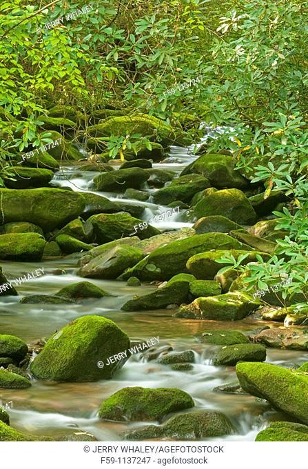 Cosby Creek, Great Smoky Mtns Nat  Park, TN