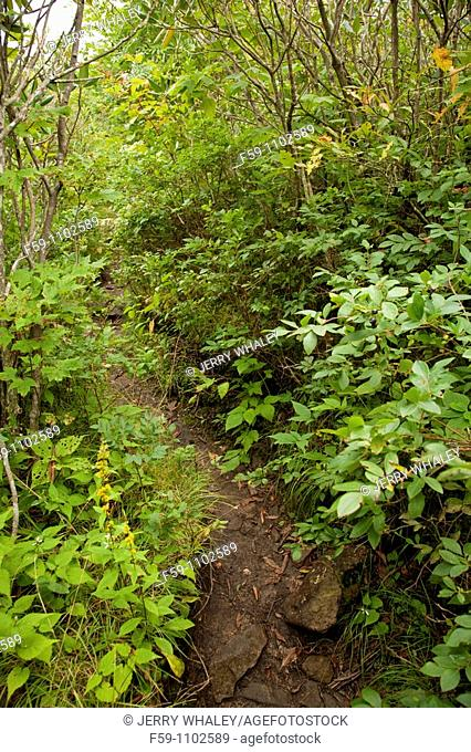 Trail, Shining Rock Wilderness Area, Pisgah National Forest, North Carolina, USA