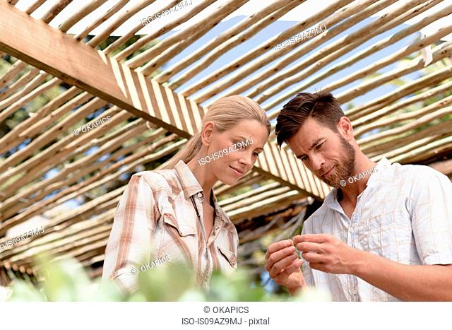 Mature couple inspecting seedlings