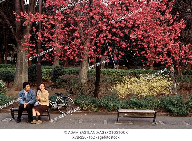 Tokyo, Japan. A young couple sitting under cherry blossom, Ueno park