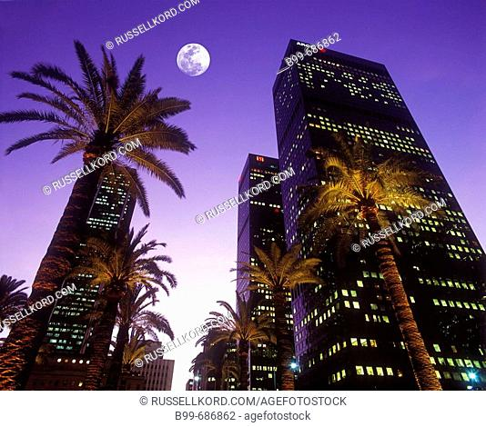 Palm Trees Figueroa, Street Downtown Los Angeles California, USA