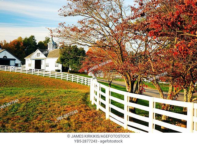 Autumn on the Horse Farm