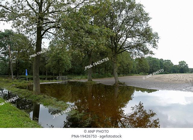 Dinkel, Losser, Twente, Overijssel, The Netherlands, Holland, Europe