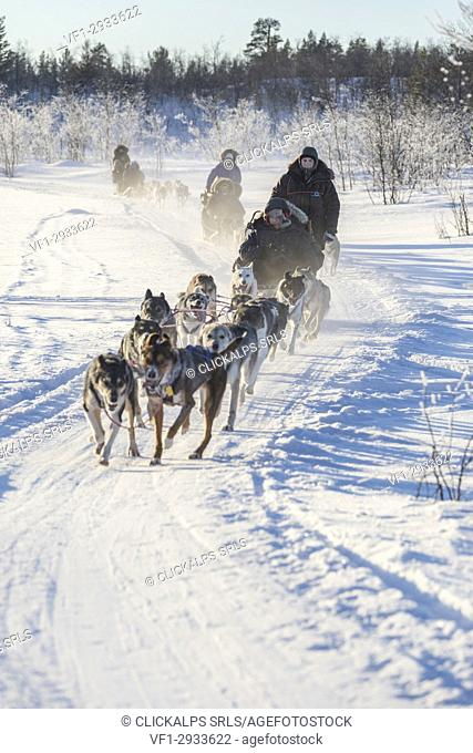 Dog sledding in the snowy landscape of Kiruna, Norrbotten County, Lapland, Sweden