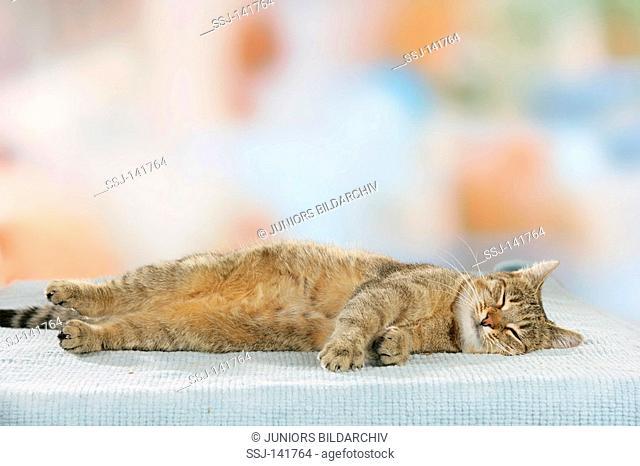 domestic cat - lying restrictions: Tierratgeber-Bücher / animal guidebooks