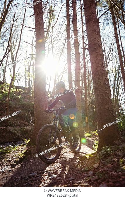 Mountain biker riding in forest on sunny day