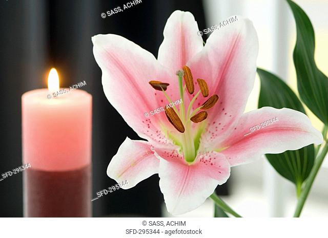 A lily and candles