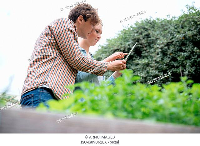 Young man and woman in urban garden, photographing plants using digital tablet, low angle view