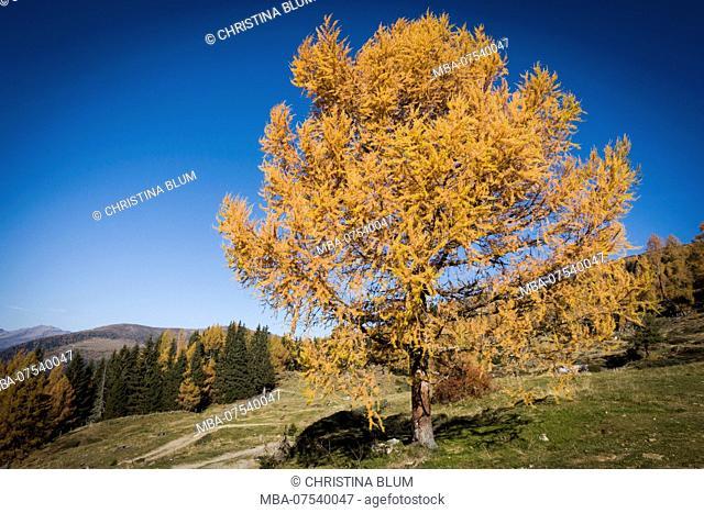 Bright autumn forest, Carinthia, Austria