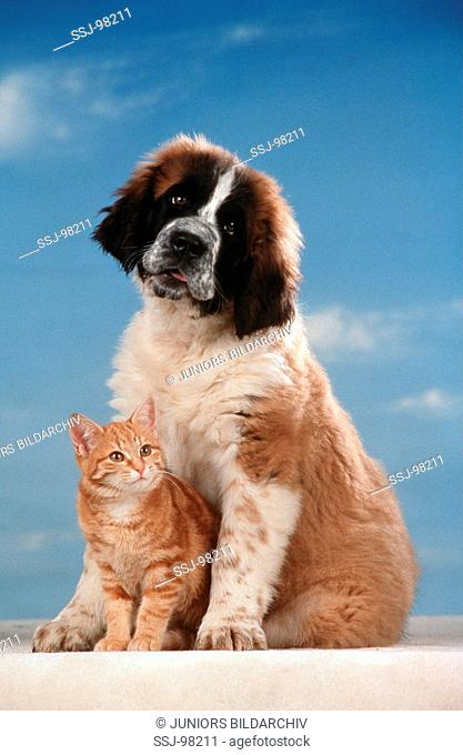 animalfriedship dog puppy with kitten