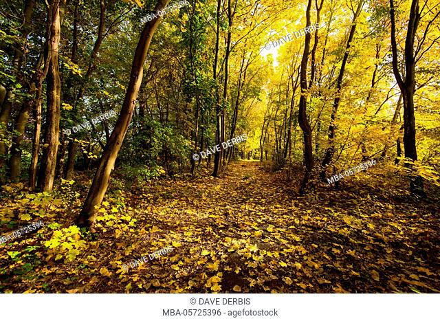 Autumn, wood, way, path, foliage, colour of the lgutters, Saxony-Anhalt, Germany