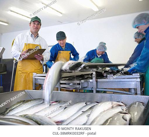 Workers in fish processing plant