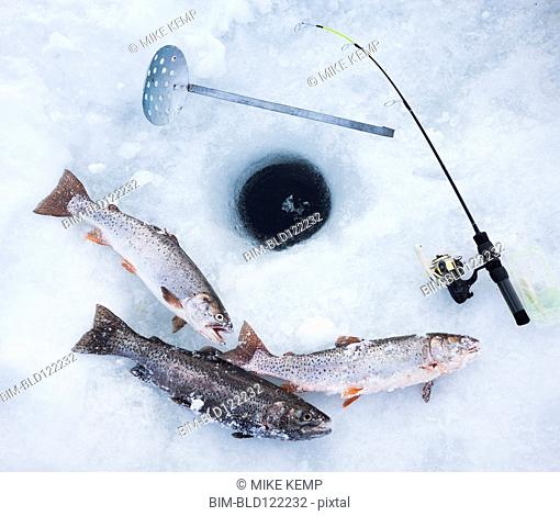 Ice fishing hole, fishing rods and trout