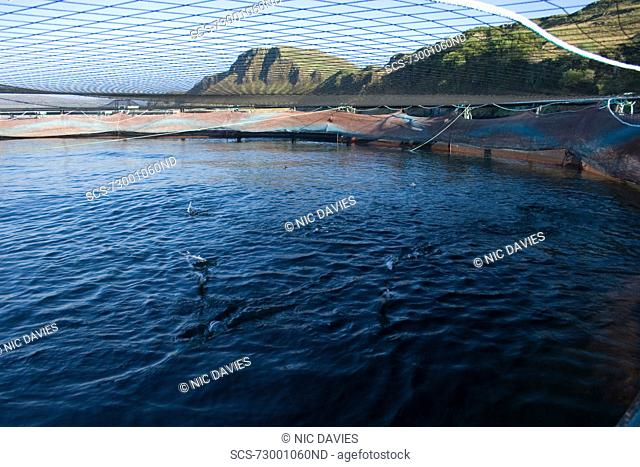 Salmon fish farm Hebrides, Scotland