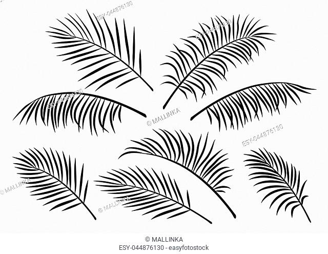 tropical set of isoated hand drawn exotic palm leaves and branches on white background