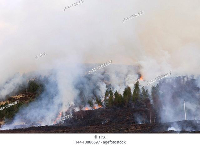 Fire, Stock Photo, Picture And Rights Managed Image  Pic  NGE