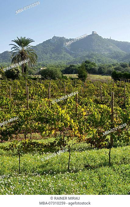 Viticulture, Monastery Sant Salvador, Felanitx, Mallorca, Balearic Islands, Spain