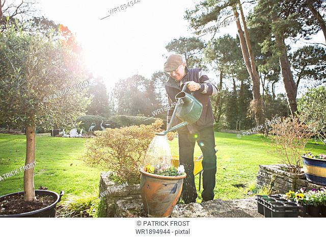 Senior man watering flowers in garden, Bournemouth, County Dorset, UK, Europe