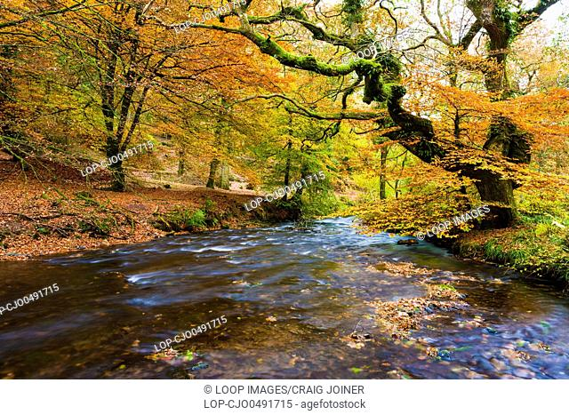 The river Haddeo in woodland at Hartford Bottom in Exmoor National Park