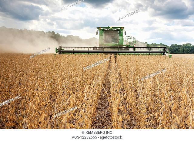 Soybean harvesting; Laytonsville, Maryland, United States of America