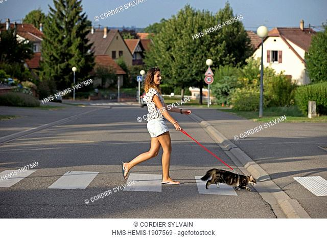 France, Bas Rhin, Bischoffsheim, one person with a cat crossing a street