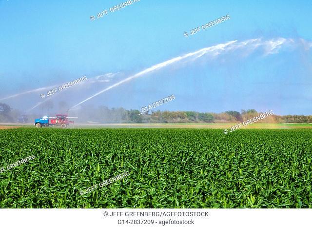 Florida, Homestead, Redland, agriculture, field, irrigation system, watering, corn, crop, truck, pump