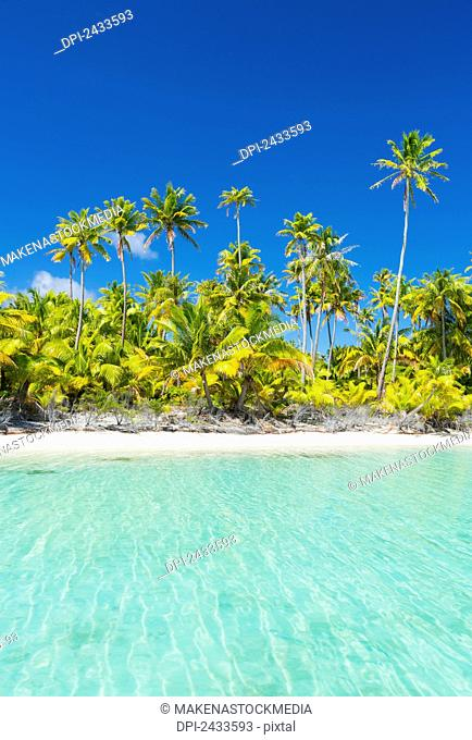 Tropical sunny island with palm trees and blue ocean; Tikehau, French Polynesia