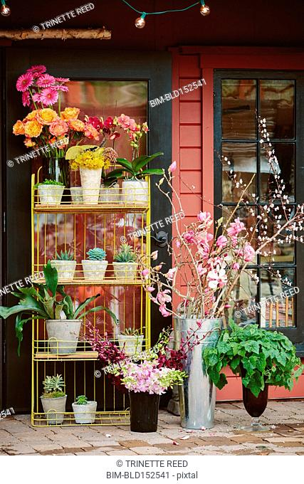 Potted plants and flowers outside shop