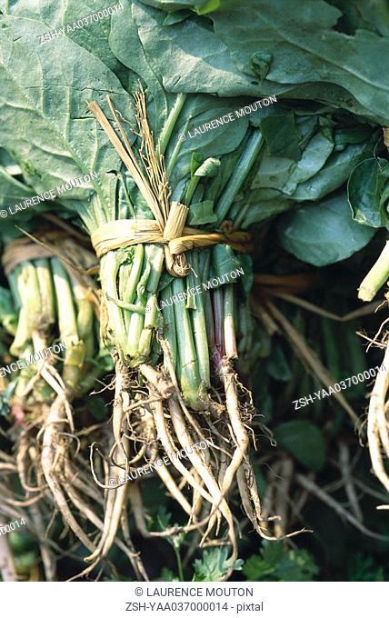 Bundles of green leaf vegetables