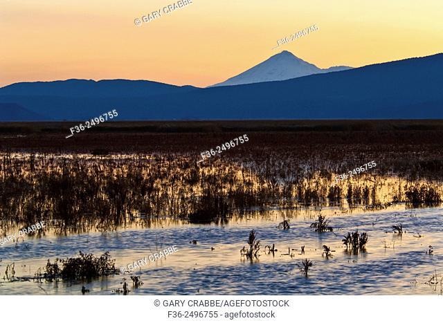 Reeds along Lower Klamath Lake, Lower Klamath National Wildlife Refuge, California