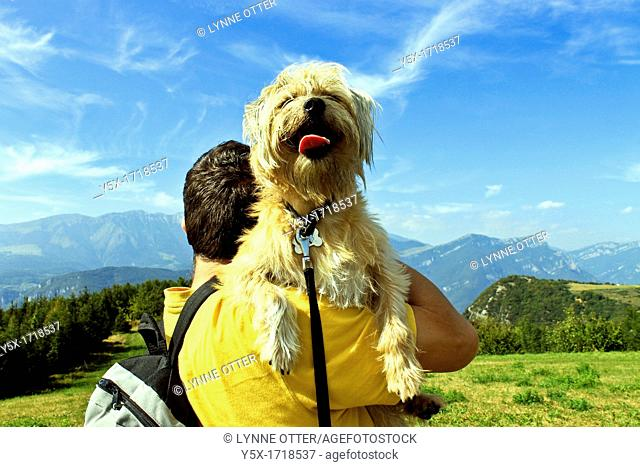 Man back to camera, shouldering tired funny dog facing camera, in mountains, Lessini Italy  horizontal