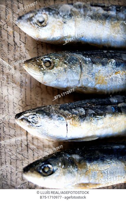 arenques, pescado azul sobre fondo de texto escrito a mano, herring, blue fish on handwritten text