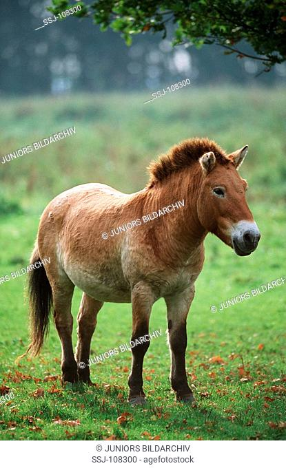 horse standing on meadow