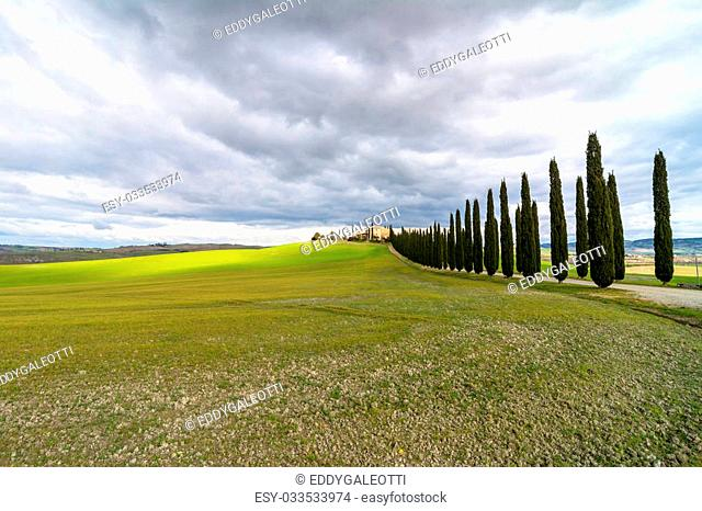 PIENZA, ITALY - January 25, 2015: day view of tuscan landscape with typical cypress alley near Pienza, Italy. In 2004 the Val d'Orcia was added to the UNESCO...