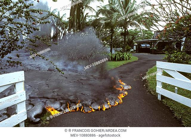 USA - Hawaii - Big Island - Eruption of the Pu'u O'o Vent - a vent of the Kilauea Volcano (Volcano Kilauea). Advancing lava flow in a garden in the village of...