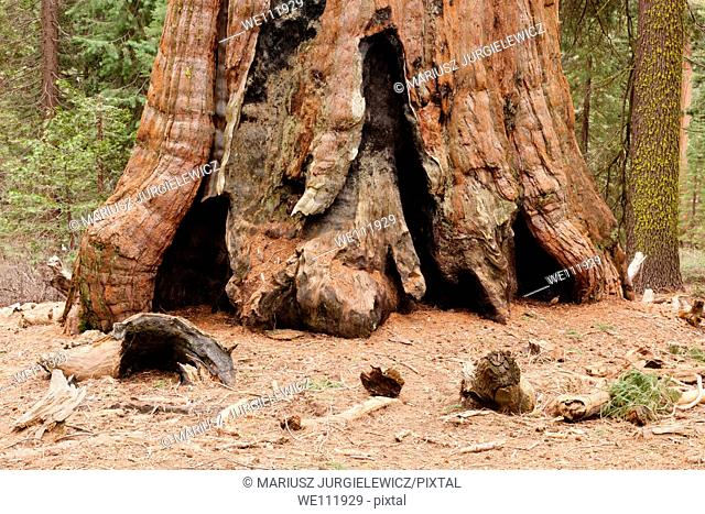 General Grant Grove is a section of Kings Canyon National Park
