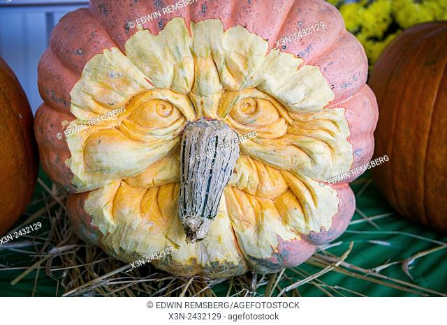 Carved pumpkin face with the stem as the nose in Wexford, Pennsylvania, USA